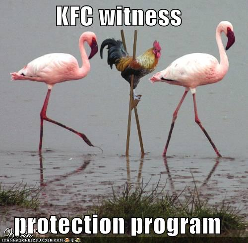 Some funny pictures !! Funny-pictures-kfc-chicken-stilts-flamingos1